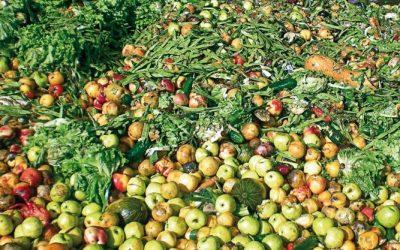 El Tribunal de Cuentas Europeo reconoce el despilfarro de alimentos como un problema para la cadena de suministro alimentario.